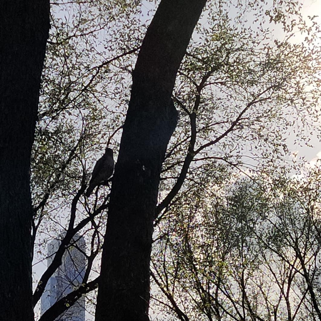 image for bird of one fence leah umansky