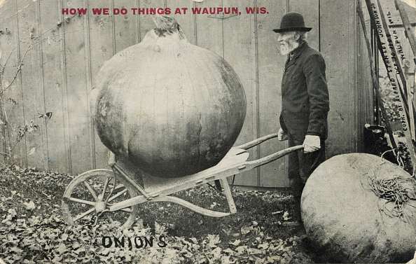 An elderly, bearded man hauls a giant onion using a dolly, Waupun, Wisconsin, October 30, 1909. The man is wearing a black hat and white work gloves. The background shows the side of a barn. Red text in the upper portion bears the inscription, 'How we do things at Waupun, Wis.' (Photo by Alfred Stanley Johnson Jr./Wisconsin Historical Society/Getty Images)